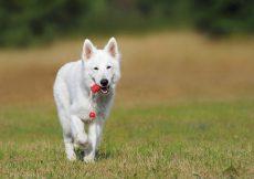 Legeglad hund